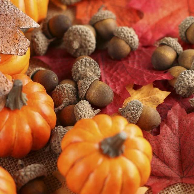 fall_leaves_pumpkins_acorns_and_picks_kit_1