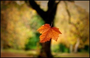 image-3-autumn-leaf-falling