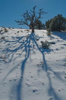 dhnv-hwy-137-10-juniper-tree-skeleton-blog1